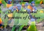The Metaphysical Properties of Colour is a subject that intrigues me. How the vibrations of colour can affect our moods and wellbeing is a complex subject. These colourful birds show of many colour properties and how these properties work together. I would love to hear your thoughts on this subject.
